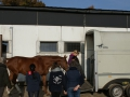 Basispass - Pferd verladen